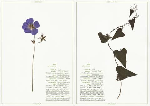Fokus Grupa, Herbarium, 2013-ongoing. Courtesy the artists.